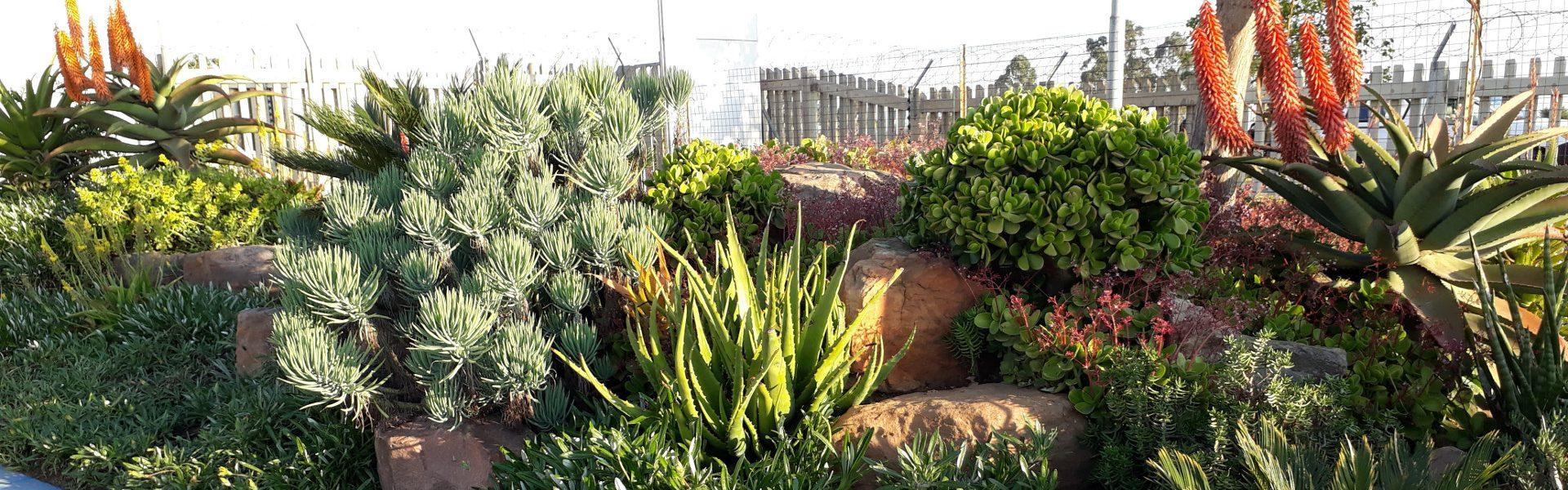 Msenge Environmental Landscapes